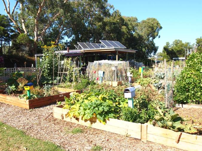 community-gardens-0171